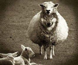 """Wolf unter Schafspelz Wahrheit Wahrheiten jetzt! Die Wahrheit hinter der """"Wahrheit"""" - Lüge, Täuschung, Betrug und falsche Lehren"""